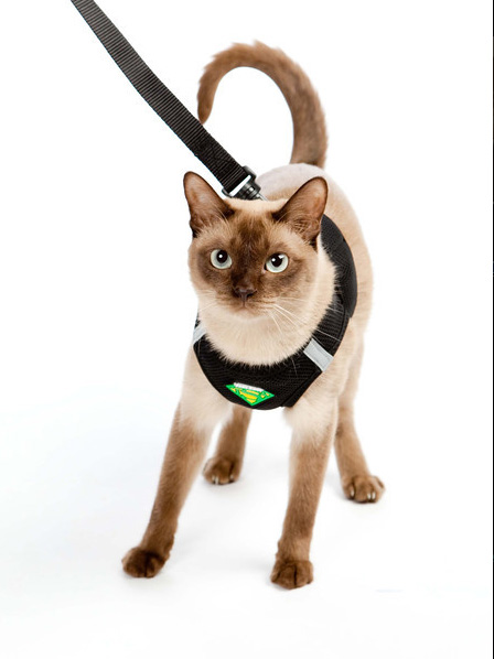 Cat Harness Leash