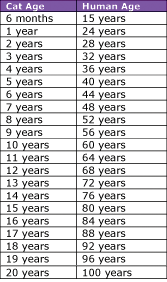 Compare Human Years To Cat Years