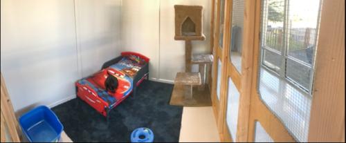 popular cat kennel