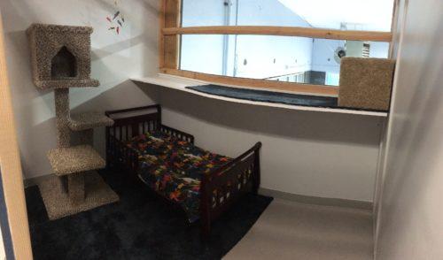 cat boarding kennel-luxury suite