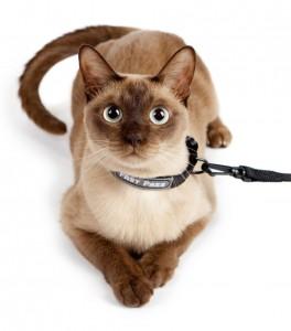 cat collar leash