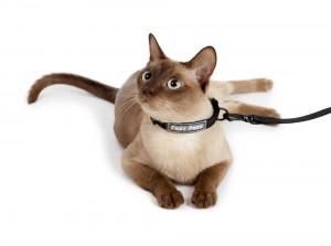 cat leash collar set