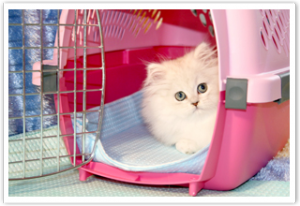 kitten in carrier with DryFur pad